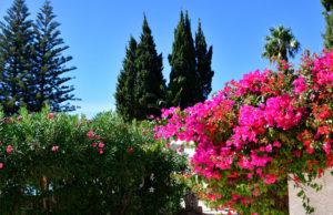 quinta paraiso da mia garden 109 1